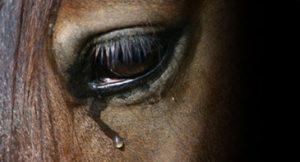 animals cry