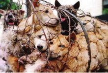 animals do cry